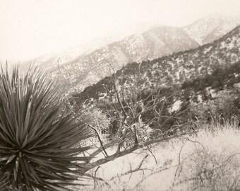 PHOTOGRAPH ARIZONA DESERT Black & White