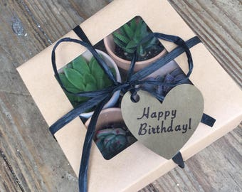 Succulent gift box- perfect for birthdays mother's day ect.