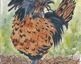 Aceo, My chicks series Her name was Lola she was a show bird reproduction