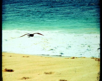 Beach Bliss - Soaring (summer photography print, green ocean waves golden sand soaring flying bird, Los Cabos Mexico travel photography)