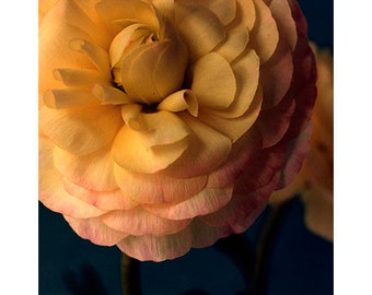 Flower Wall Decor, Ranunculus Print,  French Country, Fine Art Photography, Dark Wall Art