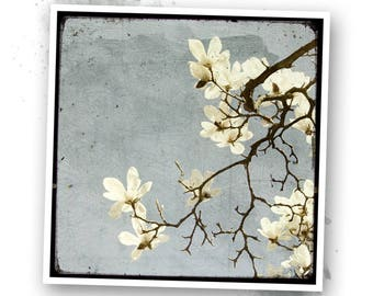 A little Spring #1 - Nature - photo art signed 20x20cm