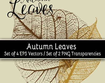 Autumn Leaves Vectors - Set of four (4) EPS vectors / two (2) PNG transparencies