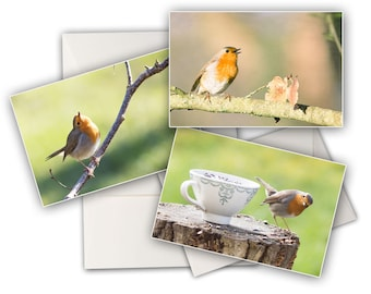 Three greeting cards Robin - bird cards - Garden Photo Robin - robin bird photo cards