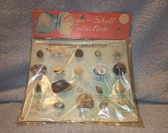 Vintage Seashell Collection