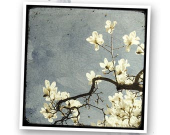 A little Spring #2 - Nature - photo art signed 20 x 20 cm