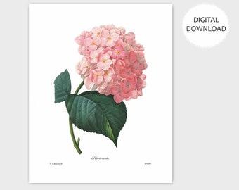 Hydrangea Art, Pink Flower Print (Instant Digital Bedroom Wall Decor, Home Office Artwork, Hallway Download ) PRINTABLE Botanical - Redoute
