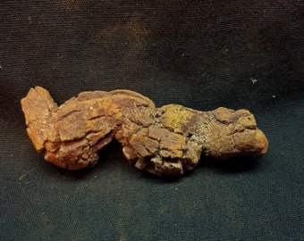 Coprolite, Fossilized Dino poo, dinosaur dung, (KP6)