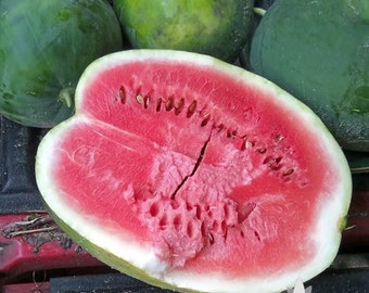 Black Diamond Watermelon Heirloom Seeds - Non-GMO, Open Pollinated, Untreated