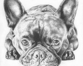 Custom Pet Portrait in Ballpoint Pen - 8x8 or 8x10