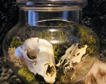 Fox Skull Terrarium Strange Vulture Culture Oddities Unique Grunge Witch Taxidermy