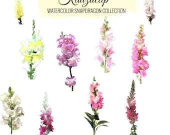 Watercolor Snapdragon Collection