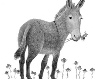 Donkey Art - donkey print - donkey illustration - 4x6 print
