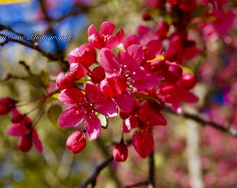 Pink Buds, Photography, Home Decor