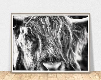 Highland Cow Print - Scottish Art, Modern Wall Art, Black And White Highland Bull, Highland Cow Art, Cow Art Print, Large Wall Art