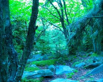 Traum-Waldmuster, verzauberte Wald Dolly Sods