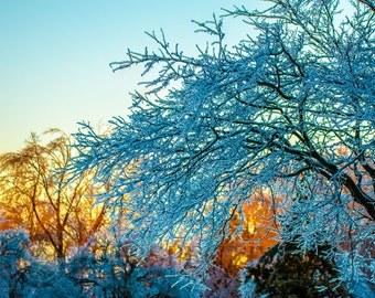 """Instant Digital Download Printable Fine Art """"Sunset after the ice storm"""" Winter Nature sunset"""