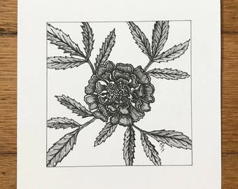 Marigold - pen and ink illustration
