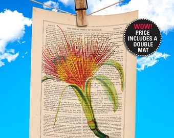 """Flower Book Print, Pachira, Money Tree Plant, Botanical Illustration printed on 1865 Antique Book Page, Plays-Of-Shakespeare """"MAT-INCLUDED"""""""