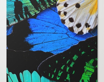 Butterfly Art Print - Butterfly Canvas Art - Butterfly Photography - Nature Photography - Large Canvas Wall Art - Blue - Green - Art Canvas