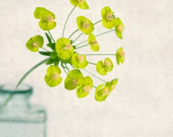 Botanical Print, Flower Photograph, Cottage Chic, Flower Print, Flower Wall Art, Nature Photography, Spurge Flower