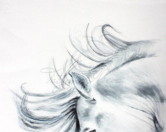 Print of a wild white horse.Flare. Drawing of a horse, black and white. Wall art, wall decor, digital print.