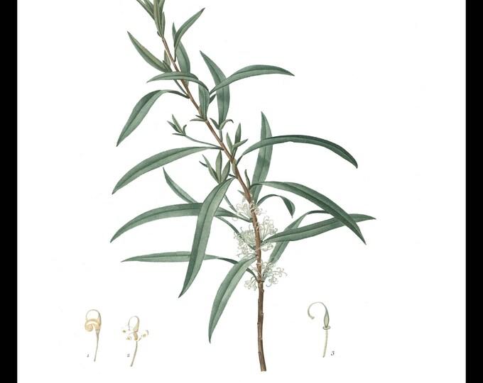 Instant Download, Botanical, Plant, Herb, Printable Art, Wall Art, Graphic, Kitchen Art, Craft, Digital Download, Botanical Wall Art, #2