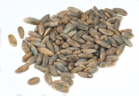 All Natural Raw Rye Malt For Home Brewing 1 Pound