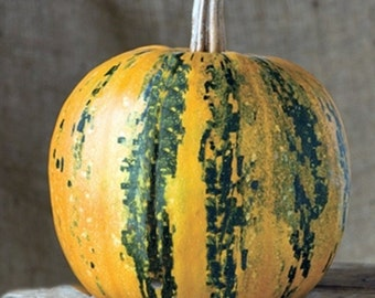 Kakai Heirloom Pumpkin Seeds Hull-less Seeds Non GMO Gardening