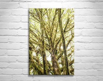 Olympic Rainforest Picture, Washington State Art, Pacific Northwest Photo, Woodlands Art, Olympic Peninsula Forest Photograph, Tree Art