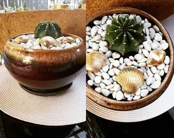 Cactus, seashells and stones in pot plant