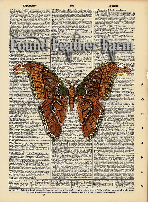 "Vintage Antique Dictionary Page with Antique Print ""Cecropia Moth"""