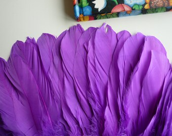 GOOSE COQUILLE FEATHERS ,  Magenta Purple  /   436