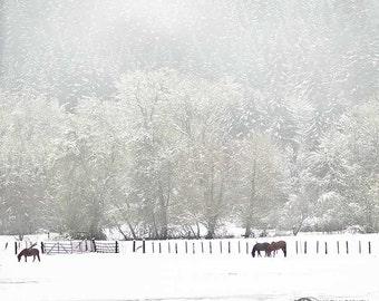 Photographie de chevaux, chevaux dans la neige, cheval Photo, photographie animalière, noir, blanc, vert