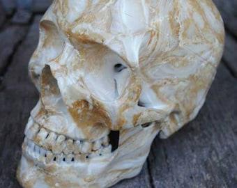 Bone-Head Skull