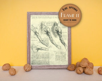 "Vintage illustration of muscles by Leonardo da Vinci - framed fine art print, art of anatomy, 8""x10"" ; 11""x14"", FREE SHIPPING - 214"
