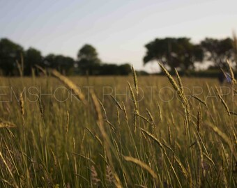 Straw in Field - Digital Download - Photography by GemShort Photography