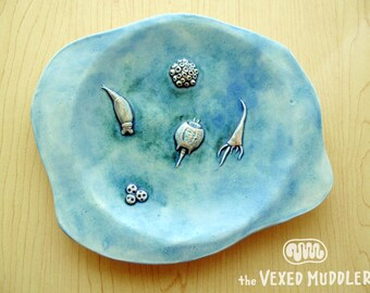 Decorative ceramic dish with rotifers and other microscopic freshwater life