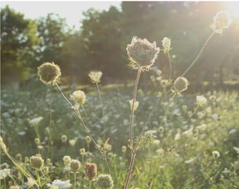Nature photography field photography flower photography sunny field art home decor field print field print  wall art field art ON SUNNY DAYS
