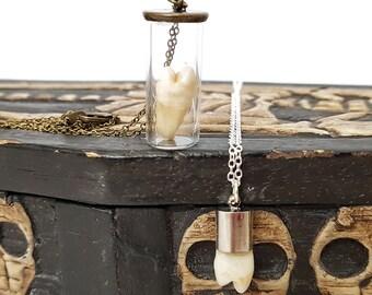 Real human tooth skull bone bones teeth necklace pendant bronze silver jewellery wicca Taxidermy Oddities