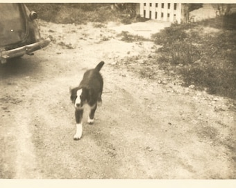 "Vintage Snapshot ""Boomer"" Puppy Dog Black Dog With White Socks Found Vernacular Photo"