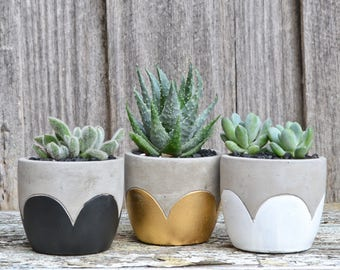 Concrete Scalloped Petals Planter