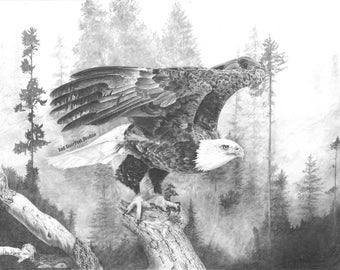 Limited Edition Fine Print of an original drawing of an Eagle