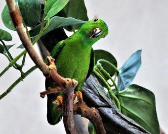 Parakeet Disarray by Oliver Butler