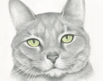 Custom Pet Portrait , Cat Drawing, Tabby Cat, Original, Hand Drawn Art from your Photo