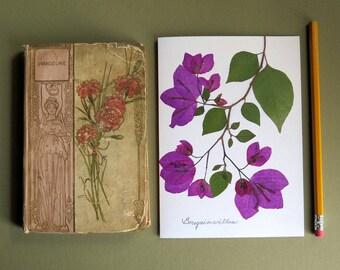 Magenta Bougainvillea flowers, pressed flowers, botanical greeting card, no.1034