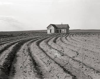 Cotton Fields, 1938. Vintage Photo Reproduction Poster Print. Black & White Photograph. Texas, South, Country, Rural, Farm, 1930s, 30s.