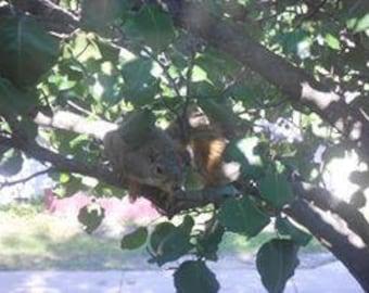 peeping squirrel