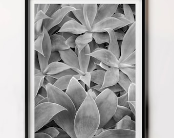 Black and White Succulent Photo, Succulent Printable, Poster Set, Succulent Poster Gift, Popular Prints