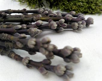 Wreath embellishments decor attachments twig decorative branches with buds spring deco mesh natural materials decorations making _ 2 sizes